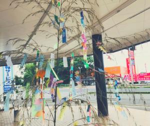 7月7日七夕飾り|大分の工務店サラダホーム
