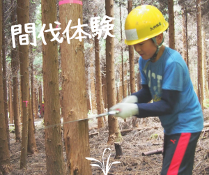 間伐体験|木繋会主催の親子体験学習|サラダのスタッフブログ