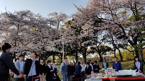 坂井建設のお花見、今年は桜に恵まれましたw サラダホームスタッフブログ